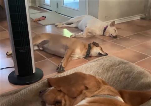 Schlafende Hunde - Wo ist das Eichhörnchen
