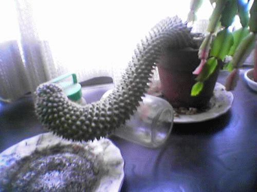 hornoxe.com_picdump19_03.jpg