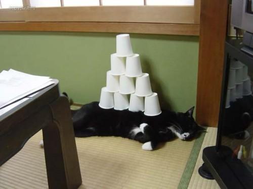 hornoxe.com_picdump24_03.jpg