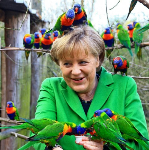 Lories sit on the head and arms of German chancellor Angela Merkel in a bird park in Marlow, northern Germany on April 17, 2012. Merkel attended the bird park during a visit of her electoral district in northern Germany. AFP PHOTO / Franzi Zˆger   GERMANY OUT (Photo credit should read Franzi Zˆger/AFP/Getty Images)
