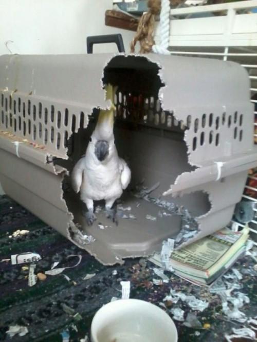 hornoxe.com_picdump304_019