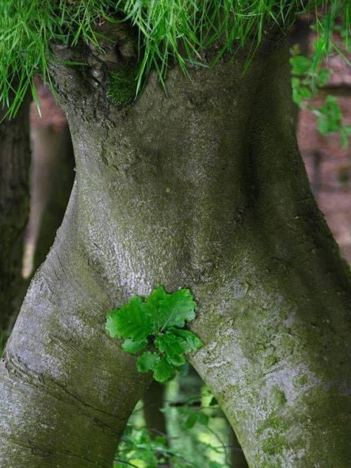 hornoxe.com_picdump64_34.jpg